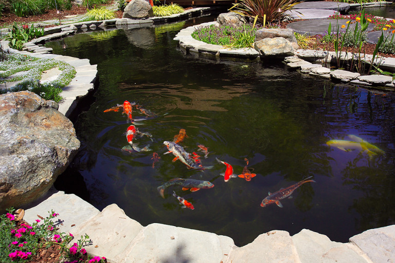 Commercial water features sugar pine studios for Koi pond pool